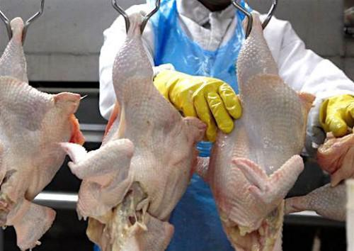 Cameroonian state injects FCfa 2 billion in private chicken production and processing project