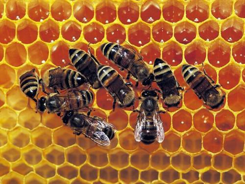 Honey production plummets by 70% in Adamaoua, Northern Cameroon