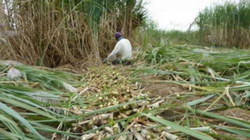 Cameroon: Government requested to raise ban on sugar imports to avoid shortage
