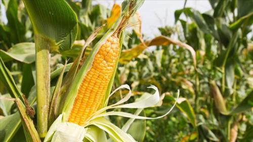 Cameroon: PIDMA distributed about FCfa 2.5 billion worth of subsidies to farmers in 2 years
