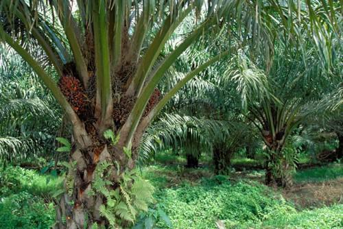 Cameroonian private sector demands more access to land ownership for agro-industries
