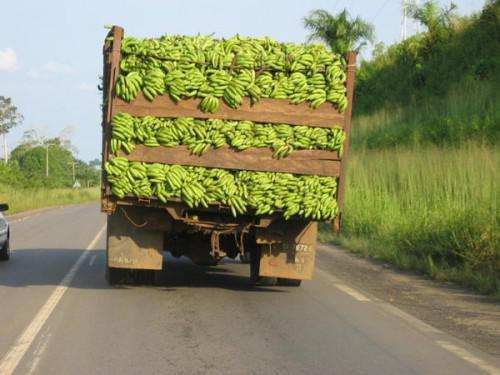 With drop in exports of bananas of 30,000 tons in 2016, Cameroon passes back African leadership to Côte d'Ivoire