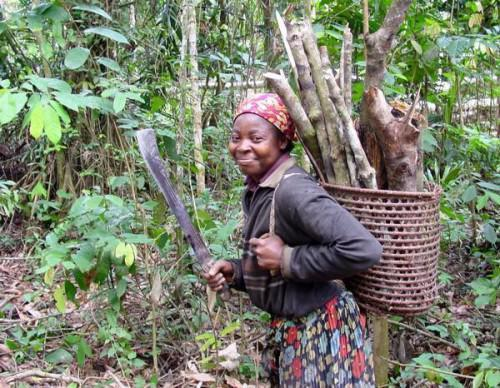 Cameroon committed to restoring 12 million hectares of cleared forests by 2030