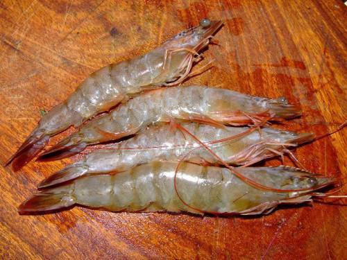 Cameroon: MIDEPECAM will launch a project to promote shrimps from Bakassi peninsula