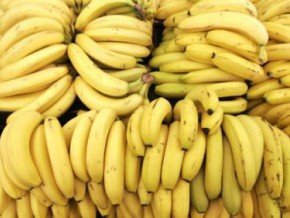 cameroon-exported-152-384-tons-of-banana-as-at-end-july-2016-a-drop-of-5-000-tons-compared-to-2015