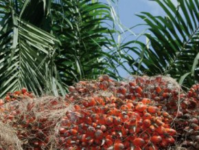 cameroon-safacam-finalised-the-construction-of-a-palm-kernel-oil-production-unit-during-the-first-quarter-2016