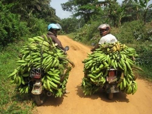 Cameroon hopes to create a medium term loan facilitation for Banane plantain au barbecue