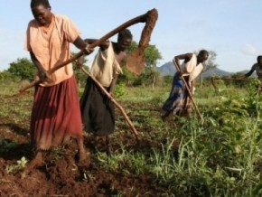 cameroon-wants-to-invest-335-billion-fcfa-in-agriculture-for-the-period-2014-2020