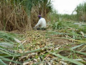 cameroon-government-requested-to-raise-ban-on-sugar-imports-to-avoid-shortage