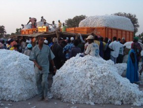 cameroon-international-context-causes-worry-in-cotton-sector