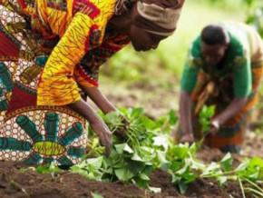 cameroon-cfa126-million-granted-to-farmers-in-adamaoua