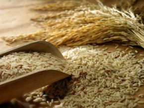 with-production-of-300-tons-a-year-cameroonian-brand-logone-rice-attempts-breakthrough-on-local-and-chadian-markets