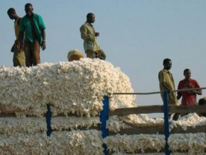 cameroon-is-the-6th-supplier-of-cotton-to-china-with-4-920-tons-during-first-semester-2017