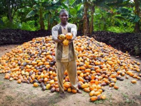 cameroon-moving-towards-a-600-increase-on-levies-from-exports-to-re-launch-cocoa-coffee-sector