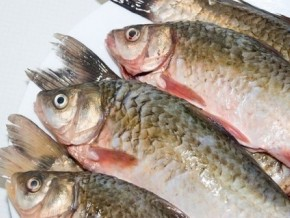 the-united-states-explores-fishing-and-aquaculture-prospects-in-cameroon