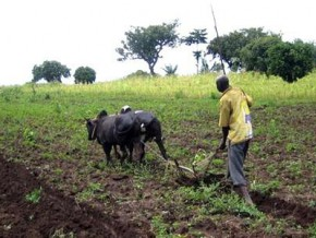 over-fcfa-190-million-in-funding-for-players-in-the-agricultural-sector-in-northern-cameroon