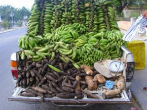 cameroon-loses-25-of-post-harvest-production-due-to-inadequate-preservation-infrastructure