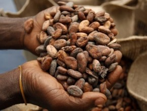 2013-2014-cameroonian-cocoa-production-down-by-9