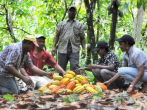 cameroon-world-cocoa-foundation-distributes-agricultural-materials-to-cocoa-growers