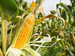 cameroon-pidma-distributed-about-fcfa-2-5-billion-worth-of-subsidies-to-farmers-in-2-years