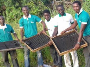 in-cameroon-the-start-up-kemit-ecology-processes-plant-waste-into-ecologic-coal