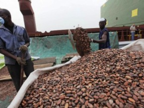 south-cameroon's-meyomessala-municipality-takes-on-cocoa-processing