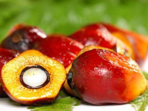 central-africa-has-strategy-of-sustainable-development-of-palm-oil-sector