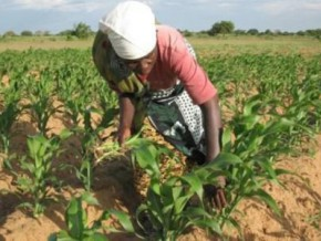 fcfa-128-million-of-financing-for-small-farmers-in-the-region-of-south-cameroon
