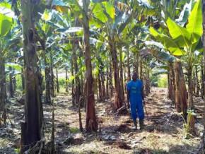 cameroon-naandan-jain-france-sarl-will-provide-irrigation-equipment-worth-fcfa-385-million-to-cdc