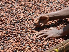 cameroon-tensions-in-the-english-speaking-part-fuel-cocoa-smuggling-to-nigeria