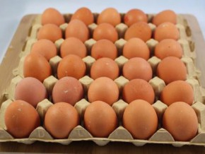 300-egg-crates-from-the-western-region-and-going-to-yaounde-seized-and-destroyed-by-public-authorities