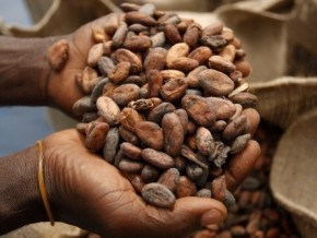 olam-telcar-cocoa-and-producam-were-the-main-exporters-of-cameroonian-cocoa-in-june