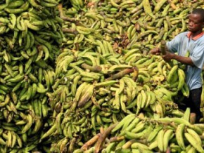 cameroon-3-billion-fcfa-to-build-packaging-and-storage-complexes-for-staple-foods