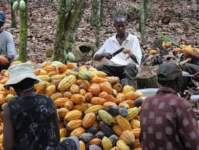 cocoa-certification-training-centre-created-in-lékié-the-largest-cameroonian-farming-bonus