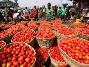 heavy-rains-and-exports-raise-tomato-prices-on-cameroonian-market