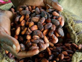cameroon-between-start-and-end-of-2016-2017-cocoa-season-kg-of-cocoa-beans-experiences-discount-of-fcfa-500