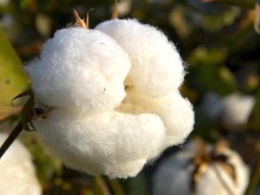 fcfa-900-million-contract-to-be-won-at-sodecoton-to-supply-cotton-packaging