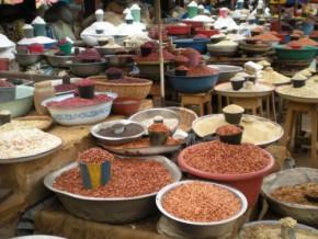 cameroon-famine-looms-over-far-north-region