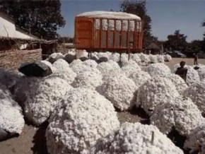 cameroon-a-franco-cameroonian-partnership-to-develop-cotton-sector