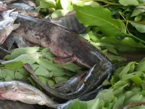 cameroon-to-produce-100000-tonnes-of-fish-with-aquaculture