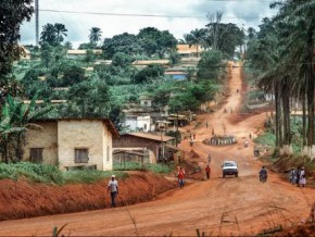cameroon-cicc-getting-ready-to-launch-loan-guarantee-fund-for-cocoa-farmers-with-fcfa-400-million-already