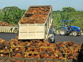 cameroon-pamol-to-open-a-30-tm-per-hour-palm-oil-plant