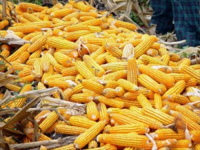 eight-products-selected-for-sale-on-cameroon's-future-commodities-exchange