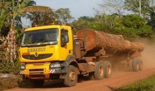Cameroon : Local timber mills' supply affected by weight limitation