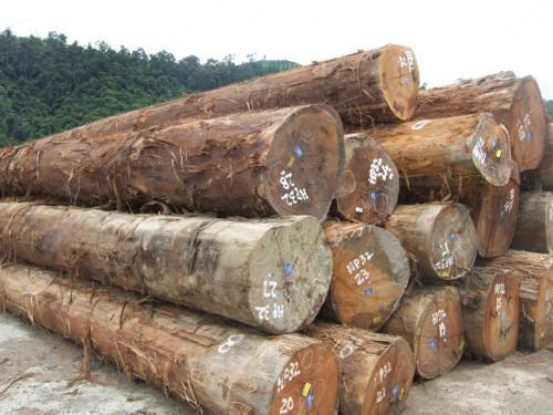 Cameroon: Wood exports to Canada down since the beginning of 2019 (ITTO)