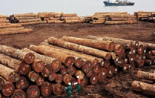 Cameroon: Raw log exports to the EU dropped 14% in H1,2019