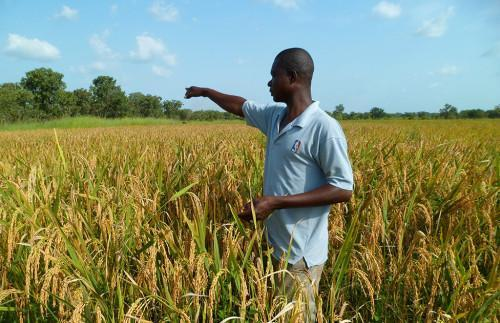 AfDB and ILO Launch Decent Rural Employment Promotion Scheme for Young Farmers in Central Africa