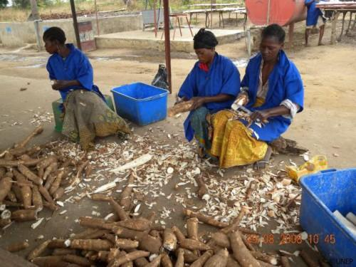 Cassava processing plant commissioned in Ngoulémakong