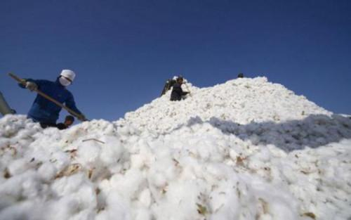 Cameroon: IDB funds 2018-19 Cotton Year with over XAF64bln