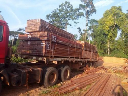 Informal sector in Cameroon meets more than 80% of local timber product demand (CIFOR)